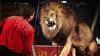 Spectacole de circ FĂRĂ animale sălbatice. Ce presupune noua LEGE
