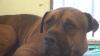 Povestea lui a impresionat milioane de oameni. Cum plânge un câine abandonat de stăpâni (VIDEO)