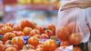 Fără substanţe chimice! Zeci de agricultori din ţară au beneficiat de tehnici inovative pentru a produce legume bio