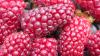 Drumul Fructelor: Încrucişezi zmeura cu murele şi culegi tayberry (VIDEO)