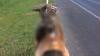 Cruzime fără margini împotriva animalelor. Un cangur a fost ucis și legat de un scaun, pe o șosea aglomerată