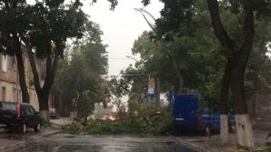 Furtună violentă în Capitală. Un copac a căzut peste firele de înalta tensiune