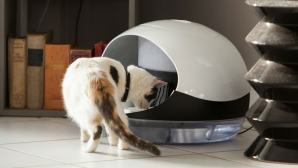 #realIT. Un aparat inteligent prin care îţi hrăneşti pisicile de la distanţă. CÂT COSTĂ şi cum funcţionează (VIDEO)