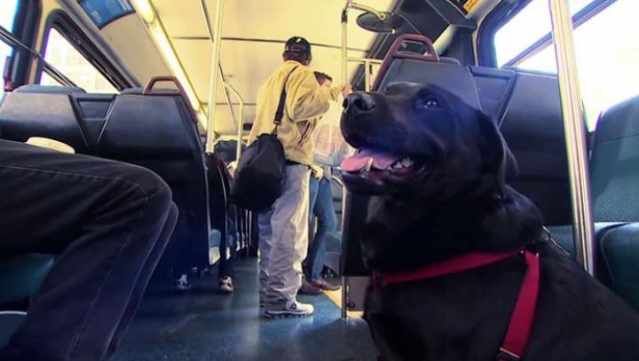 Povestea IMPRESIONANTĂ a câinelui care merge singur cu autobuzul până în parc (FOTO)
