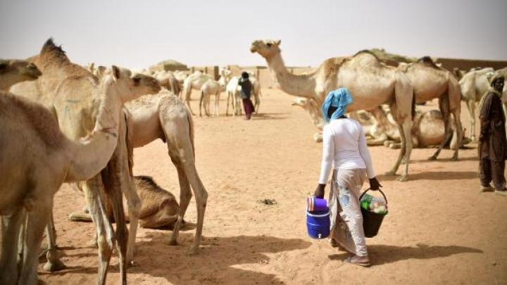Criza din Golf. 15.000 de cămile au fost extrădate din Arabia Saudită