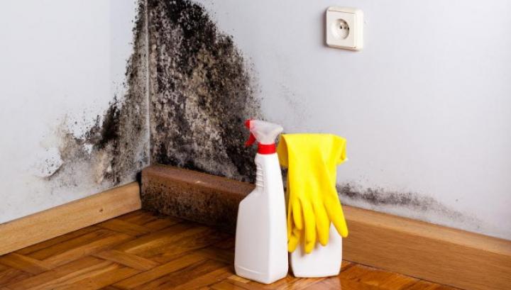 PERICOLUL din casele noastre: Mucegaiul, mai nociv decât se credea anterior