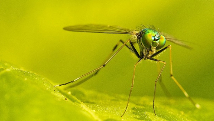 Soluții împotriva țânțarilor. Află cum poţi prepara un remediu MINUNE