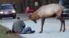 A văzut un elan pe marginea drumului, a oprit să facă o poză. Cum s-a comportat animalul (VIDEO)