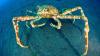Top 10 creaturi bizare din adâncul mărilor (FOTO)