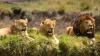 Trei lei au fost împușcați mortal după ce au evadat dintr-un parc național