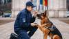 """Câinii Poliţiei de Frontieră sunt campioni europeni. Doi patrupezi au participat la competiţia """"Săptămâna Chinologică Europeană"""" din Bulgaria"""