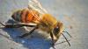 IMAGINI DE GROAZĂ! Un indian a fost filmat în timp ce şi-a băgat sute de albine sub haină