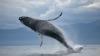 MOMENTE DE GROAZĂ pentru o familie. O balenă, la doar un metru de barca în care se aflau cel puțin 5 oameni