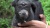 Incredibil! O capră cu chip de demon a înspăimântat locuitorii unui sătuc din sudul Argentinei