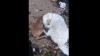 EMOŢIONANT. Un câine s-a aruncat în apa oceanului pentru a salva un pui de căprioară (VIDEO VIRAL)