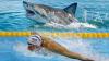 Celebrul înotător american Michael Phelps şi-a măsurat viteza cu un rechin alb