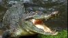 ÎNGROZITOR. Un crocodil a ucis o mamă și copilul ei de cinci luni