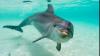 Experiment: Un neurolog faimos a drogat delfini. Care au fost scopul şi urmările ''studiului''