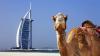 Istoria glorioasă a Emiratelor Arabe Unite. EAU se numără printre cele mai bogate ţări din lume