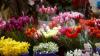 Administratorul unei firme de livrare de flori, acuzat de evaziune fiscală şi spălare de bani în proporţii deosebit de mari