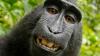 SCANDALOS! Un fotograf și o maimuță se judecă de doi ani pentru drepturile de autor asupra unor selfie-uri