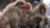 Câteva maimuțe au provocat haos într-o clădire guvernamentală din New Delhi