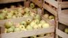 Producția pomilegumicolă din Moldova poate fi vămuită la toate posturile vamale rusești