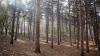 Astăzi este marcată Ziua Internațională a Pădurilor