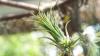 Planta care se hrăneşte cu aer este printre cele mai fascinante ciudăţenii ale naturii