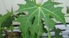 Darul zeilor. Planta care vindecă peste o sută de boli