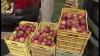 Agitaţie în livezile de meri! Producătorii au început recoltarea soiurilor de vară
