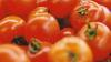 OPERAŢIUNE DE AMPLOARE: 122 de tone de pesticide contrafăcute extrem de periculoase, confiscate în țări din UE