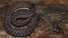 Invazie de șerpi într-o comună din România. Autorităţile caută specialişti care să îi scape de reptile