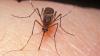 Studiu: Țânțarii ar putea fi folosiți pentru rezolvarea crimelor