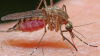 O companie americană a eliberat 20 de milioane de țânțari într-un oraș din California. Vezi motivul (VIDEO)