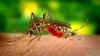 Aproape 300 de oameni au murit în Sri Lanka, în cea mai mare epidemie de febră dengue din istoria țării