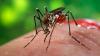 Răspândirea unor boli transmise de ţânţari ar putea fi redusă. DESCOPERIREA făcută de cercetători