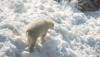 Chiar dacă afară sunt de 25 de grade Celsius, într-o menajerie din Finlada a venit iarna (VIDEO)