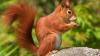 San Diego: Peste 45 de mii de oameni au rămas fără lumină din cauza unei veverițe