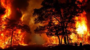 Incendii de pădure devastatoare în California. Peste 1.500 de locuitori au fost evacuaţi din calea flăcărilor (VIDEO)