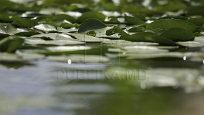 METEO 5 iulie: Nu uitaţi umbrelele acasă! Vor cădea ploi cu descărcări electrice