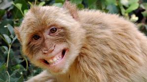 O maimuță a lăsat un oraș întreg fără curent electric