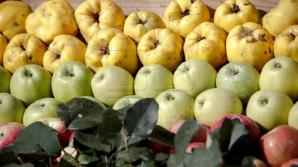 Fructe și legume pe placul strănilor: În primele șapte luni ale anului, țara noastră a exportat 108 mii tone de fructe