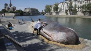 Spaimă mare pentru parizieni. Caşalotul de 30 de tone şi lung de 20 de metri era de fapt o statuie din pastic