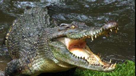 IMAGINI EMOŢIONANTE! Cum și-a apărat un câine viteaz stăpânii de atacul unui crocodil (VIDEO)