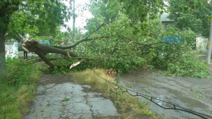 Ploile și vântul puternic au rupt copacii în regiunea de nord a țării (FOTO)