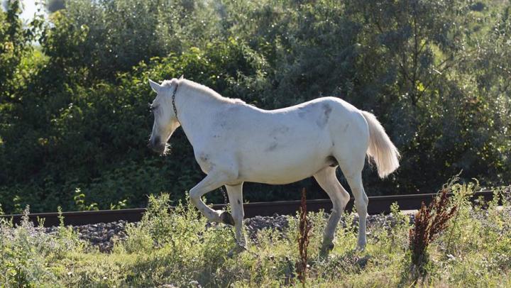 Cruzime fără margini faţă de animale. Un cal, găsit îngropat în Capitală