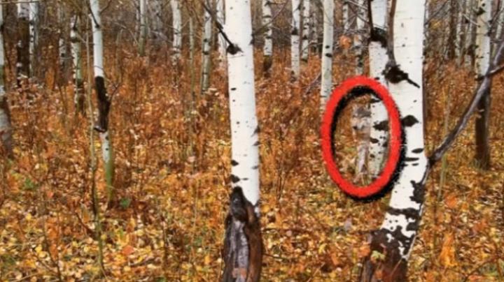 TEST: Oamenii care văd din prima animalul din această poză au un IQ foarte ridicat
