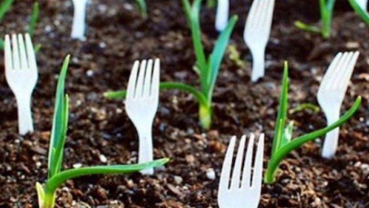 Ce se întâmplă dacă înfingi furculiţe de plastic în grădină? Motivul este genial