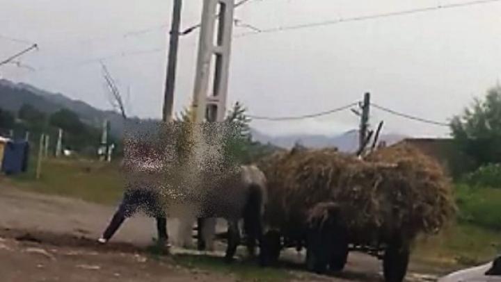 Un cal, snopit în bătaie de doi bărbați, în plină stradă (IMAGINI TULBURĂTOARE)